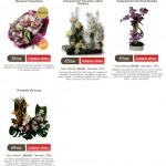 regalar orquídeas para San Valentín