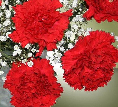 Comprar claveles rojos: una intención cargada de pasión y simbolismo