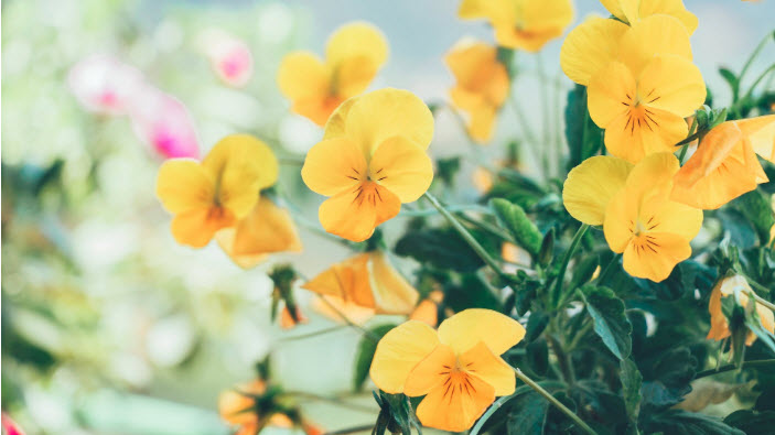 Flores Low Cost Online