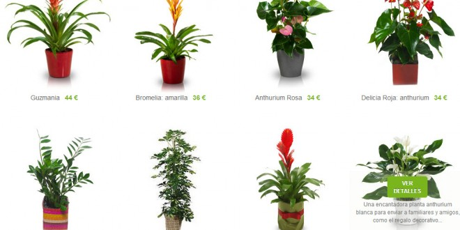 Plantas ornamentales a domicilio de interior y exterior for Plantas y arbustos de exterior