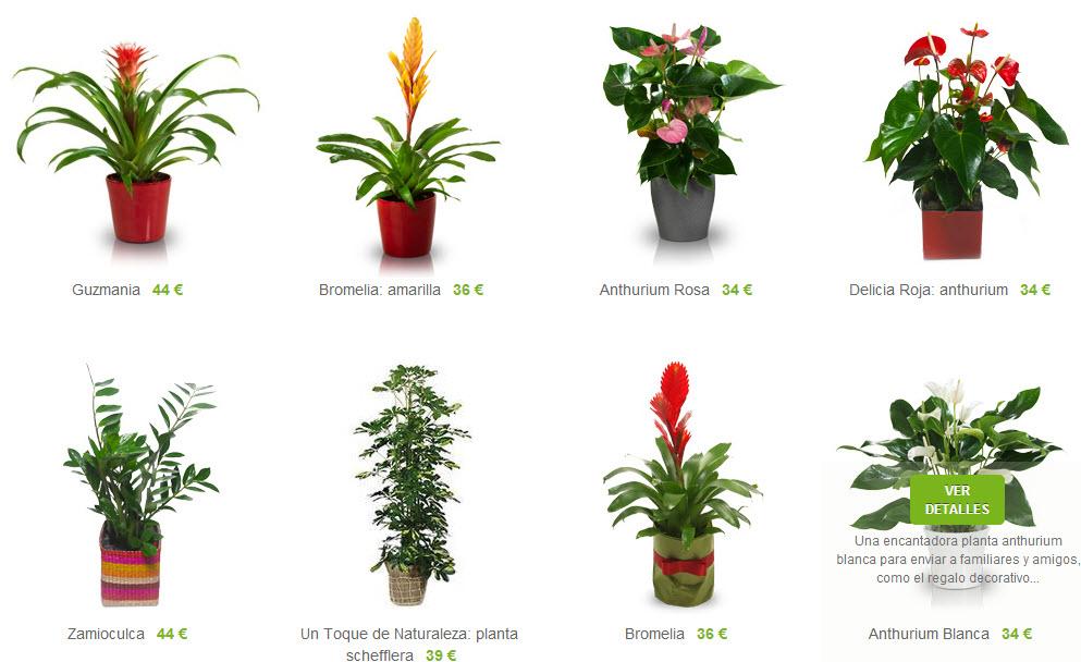 plantas ornamentales a domicilio de interior y exterior