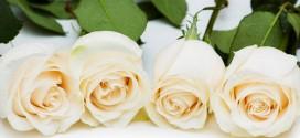Flores rosas: baratas en colores amarillas o blancas