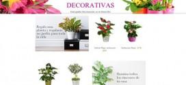 Cestas de plantas naturales online para regalo a domicilio