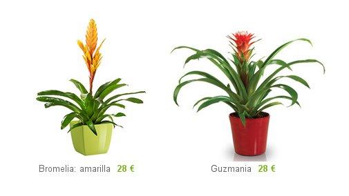 Comprar plantas decorativas online precios y env os for Plantas decorativas