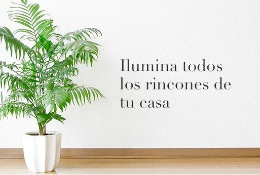Comprar plantas decorativas online