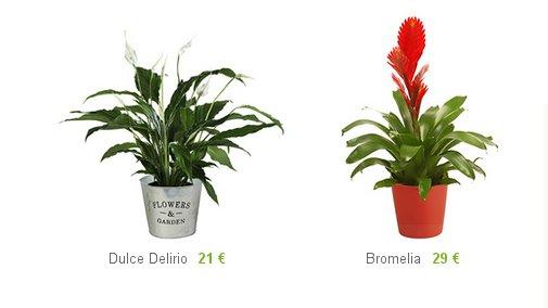 Comprar plantas decorativas precios