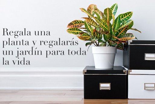 Comprar plantas decorativas