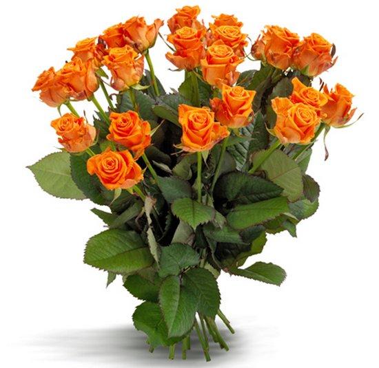 Comprar rosas naranjas