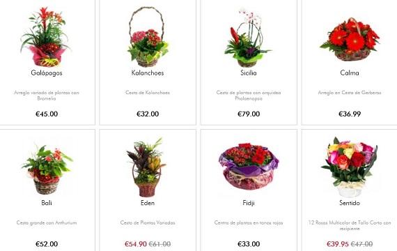 cestas de flores online