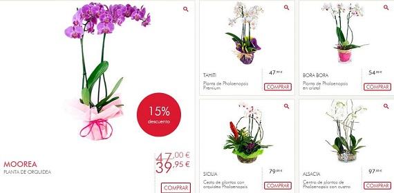 interflora orquídeas