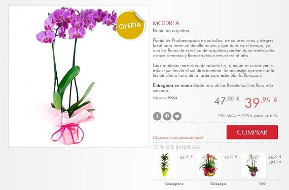 Flores de oto o 2018 online y baratas a domicilio precios for Donde venden plantas baratas