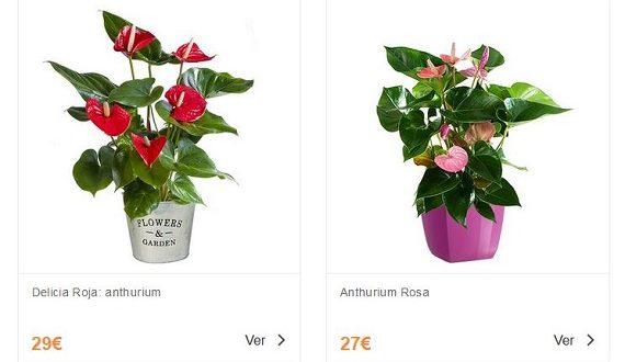 Flores tropicales baratas online y a domicilio: cuidados básicos