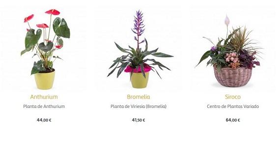 flores para empresas a domicilio