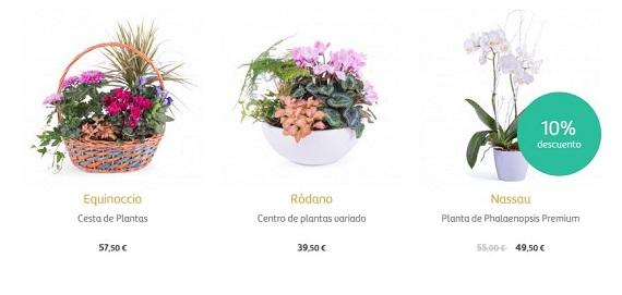 flores para empresas baratas