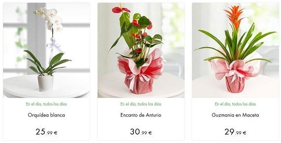 lolaflora plantas