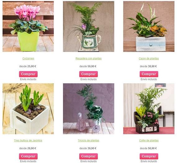 quedeflores plantas