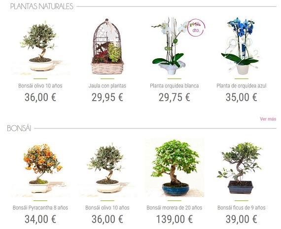 regalarflores.net plantas